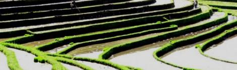 Balinese rijstvelden officieel uitgeroepen tot Cultureel Erfgoed van Unesco