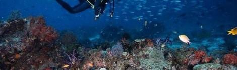 Onderwaterwereld in Raja Ampat