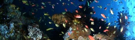 Sulawesi: een waar duikersparadijs